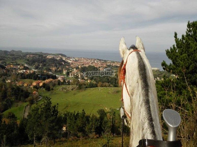 Horseback riding for experts Asturias