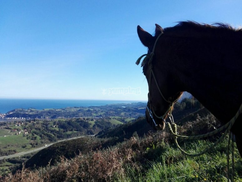 Views from the horse