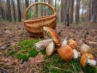 篮子和蘑菇
