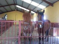 caballos en la chopera