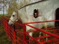 Bellos ejemplares de caballo