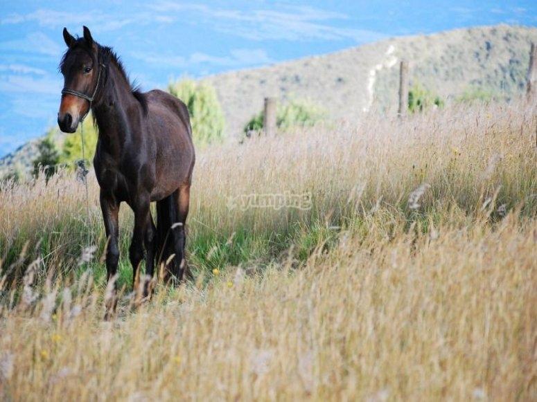 领域中的黑马