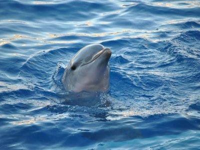Explore and Fishing Tarifa Avistamiento de Cetáceos