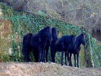 Oferta Paseo en pony en Cervell� para ni�os de 4 a 8 a�os