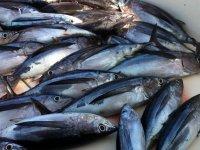 Bons résultats de pêche