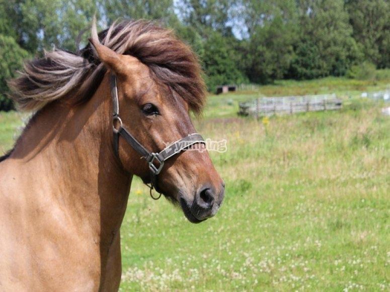 Nuestro caballo.jpg