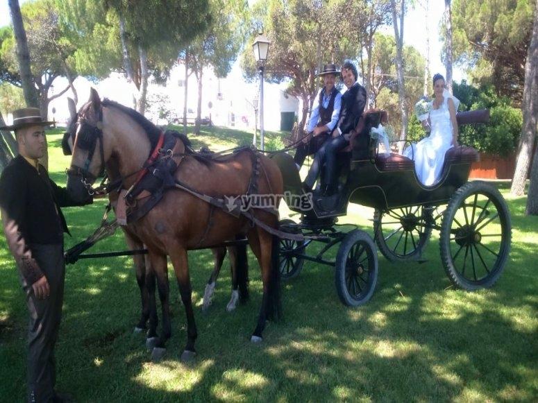 新娘骑在马车