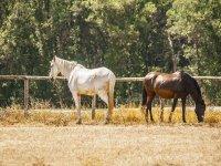 ven a pasear con nuestros caballos