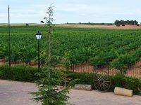 Gardens overlooking the vineyards