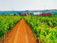 Paseo entre los viñedos de la finca