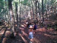 Adentrandonos en el bosque tras el guia