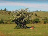 Caballo bajo el arbol