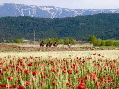 Ruta a caballo Cogollos de Guadix dos horas