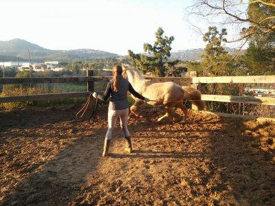 Initiation course, horse riding Cervelló, 10 hours