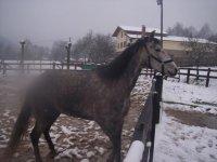 caballo listo