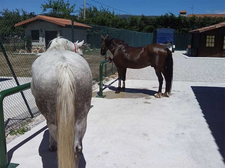 享受我们的马匹