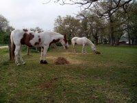 我们的马--999-自由