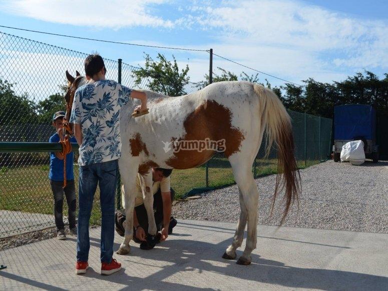 Cuidado de los caballos