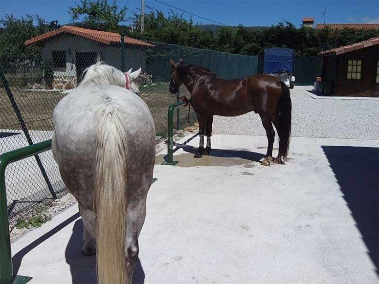 我们的马--999-小班的课程
