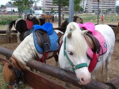 Ruta en pony para niños en Laredo 1h 15min