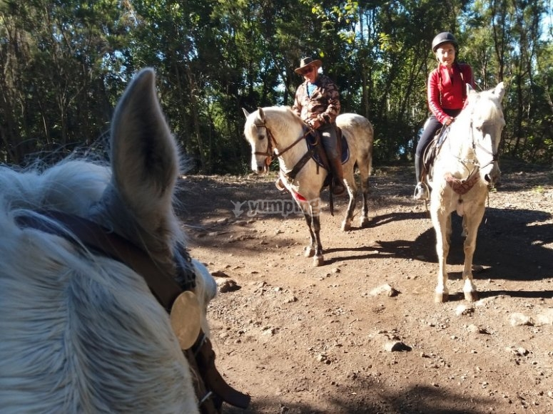 Ride a horse in La Orotava