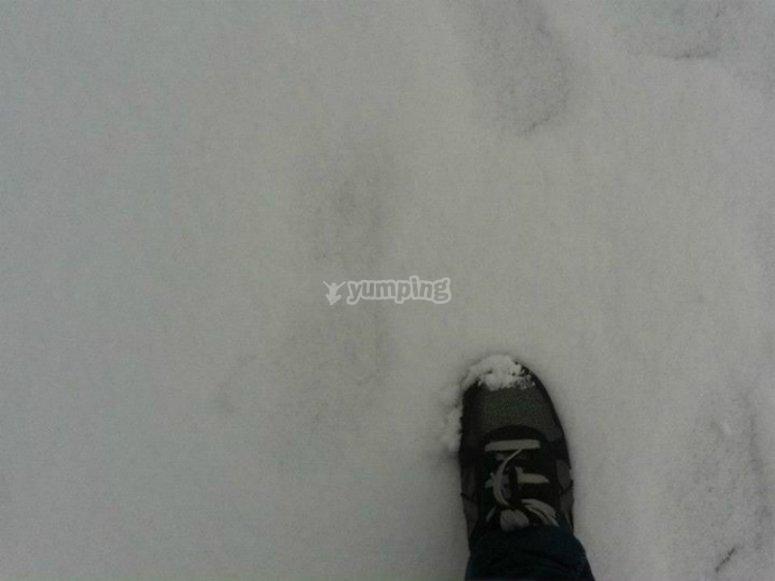 nieve blanca