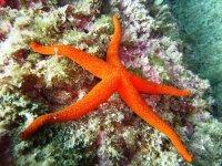 Buceo en el Mediterraneo