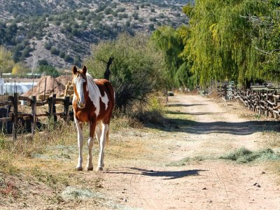 Horseback Tour, Madrid Mountains 1 Hour