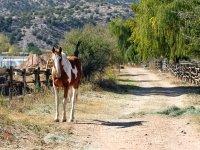 Paseo a caballo por la sierra de Madrid 1 hora