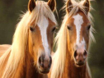 Pasear a caballo en la Villa de Meco 1 hora