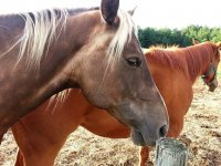 Montar a caballo alrededores de Meco 2 horas