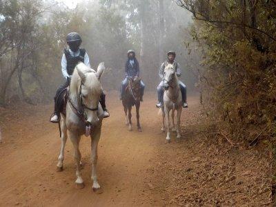 Paseo a caballo y quad La Orotava para residentes
