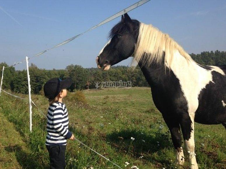 Kid with a pony