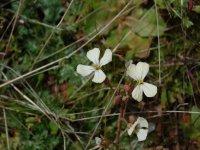 white flowers of a bush