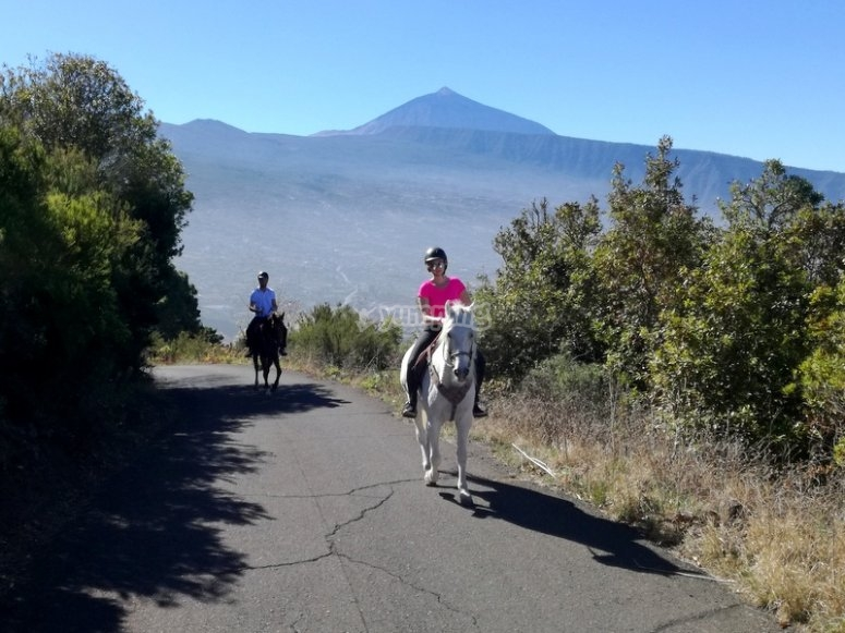 Horses and Teide