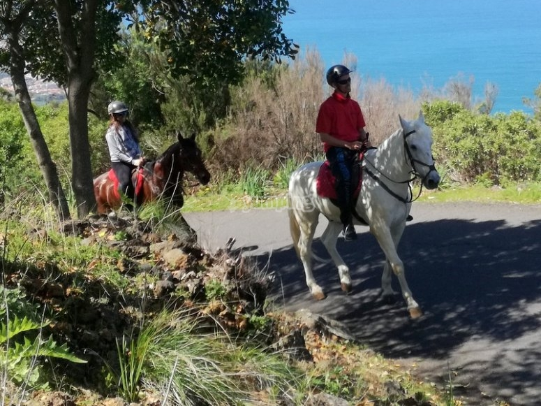 Experience by horse in Tenerife