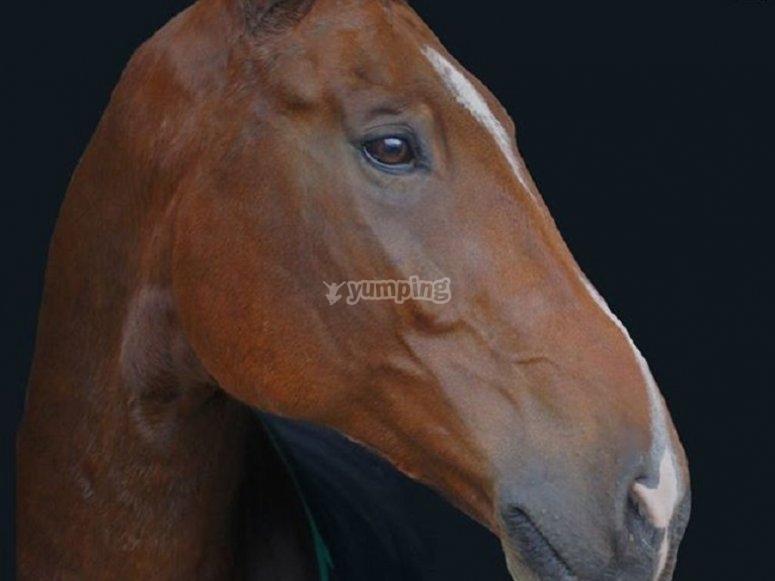 马stable中