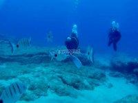 Practicando submarinismo en Playa Chica