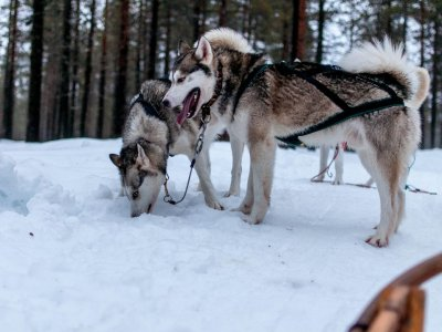 Dog Sledding Route at Benasque Valley, 1h