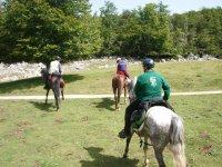 Equitazione in gruppo