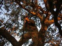 Apuntando desde las ramas del arbol