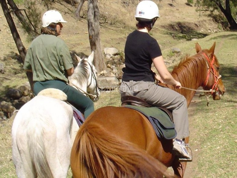 Horses for the trip