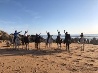 About horses on the beach