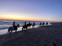 与马匹在海滩上黄昏