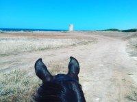 Caballo acercandose a la playa en Cadiz