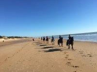 一群朋友在海岸上的马匹