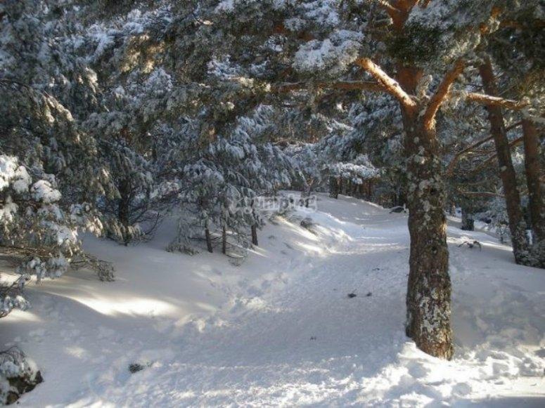Caminos cubiertos de nieve