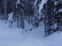 松树之间的徒步路径