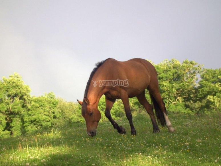 Cavallo in erba naturale
