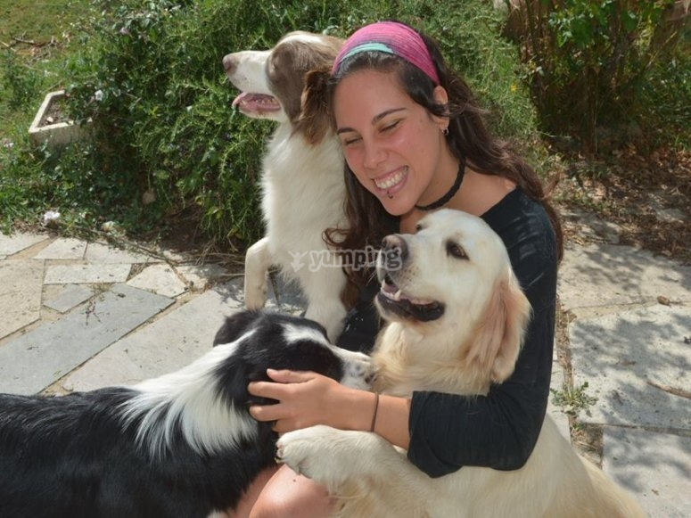 Caressing the dogs
